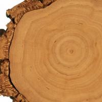 Naturholz für die Verarbeitung zu Möbeln
